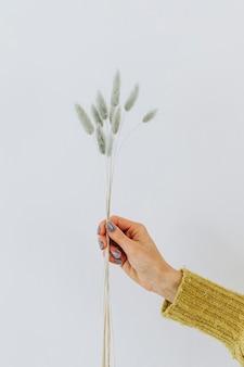 Mujer sosteniendo una hierba de cola de liebre contra una pared blanca