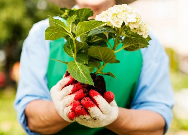 Mujer sosteniendo hortensias en manos