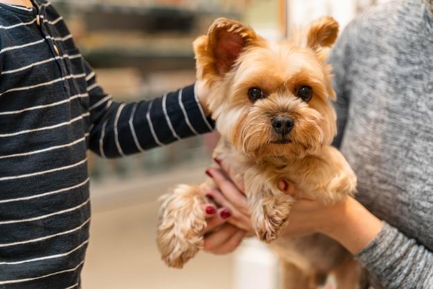 Mujer sosteniendo un lindo perrito en la tienda de mascotas