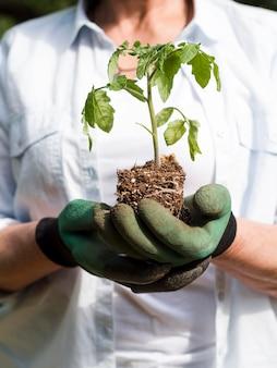 Mujer sosteniendo una pequeña planta en sus brazos