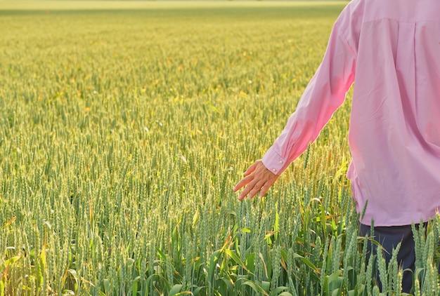 La mujer toca las espigas de trigo con su mano, el sol poniente sobre el campo de trigo, la primavera la cosecha de grano en el campo. copie el espacio, fondo natural