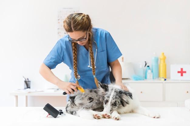 Mujer veterinaria acicalando el pelo de perro