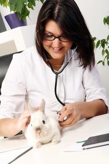Mujer veterinaria está comprobando la salud del conejo blanco