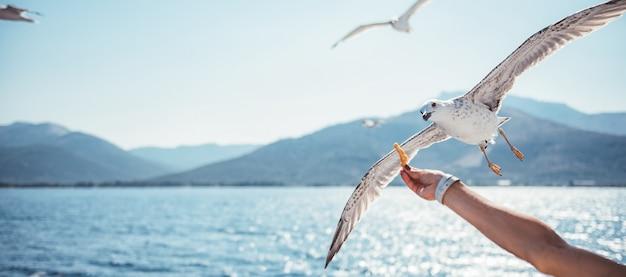 Mujer viajando en ferry y alimentando a las gaviotas
