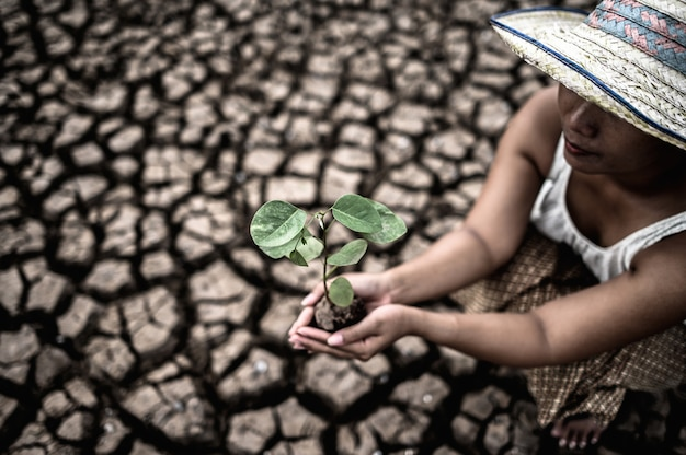 Las mujeres están sentadas sosteniendo las plántulas en tierra firme en un mundo en calentamiento.
