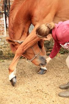 Mujeres hermosas le dan una manzana a su caballo.