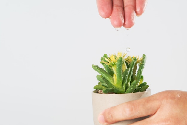 Las mujeres de la mano dejan caer el agua al arbolito o cactus.
