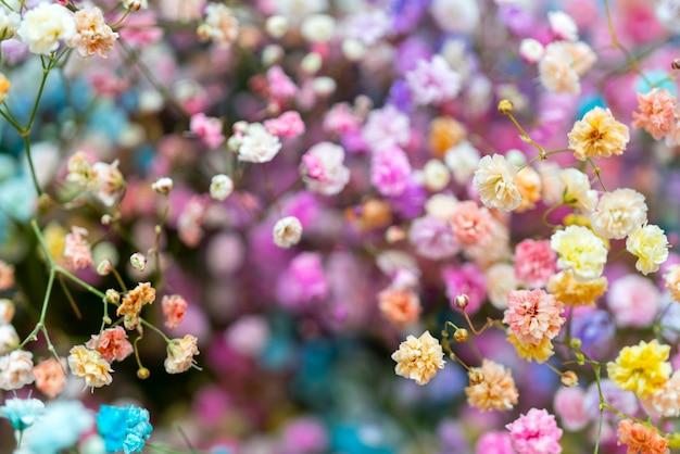 Multicolores pequeñas flores decorativas hermosas.
