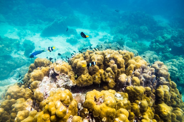 Mundo submarino peces del mar nadan alrededor de piedra roca