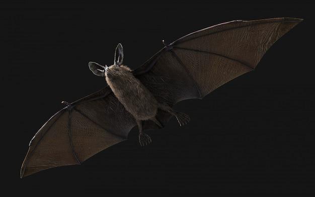 Murciélago vampiro sediento de sangre que se abalanza sobre la oscuridad