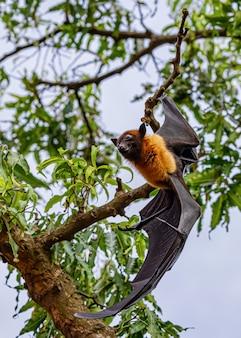 Los murciélagos descansan en el árbol