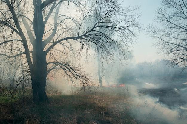 Muro de fuego de estepa de humo, incendios forestales ardiendo en la hierba de primavera y ramitas