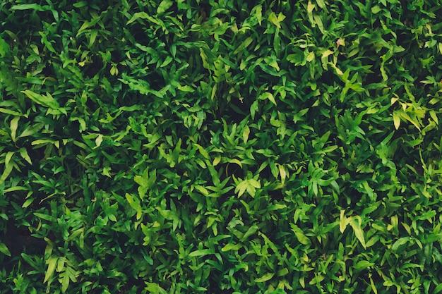 Muro de las hojas usado como fondo, cubriendo la superficie, decorando.
