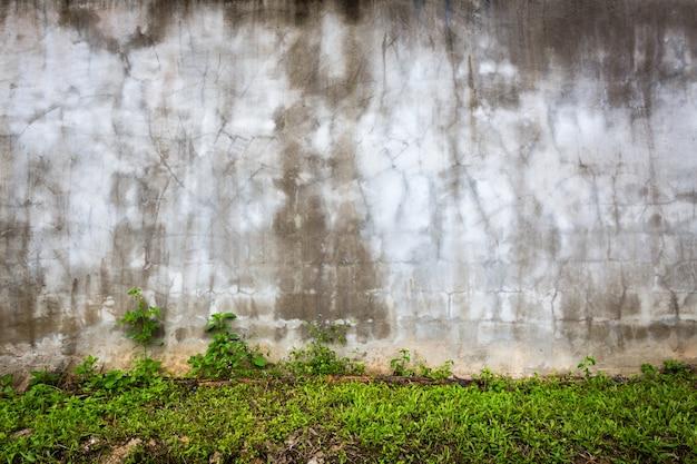 Muro de piedra con humedad y césped