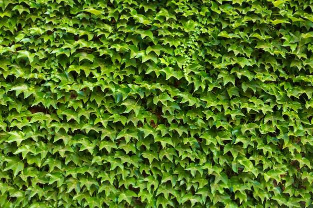 Muro de piedra en el jardín entrelazado con una planta verde.