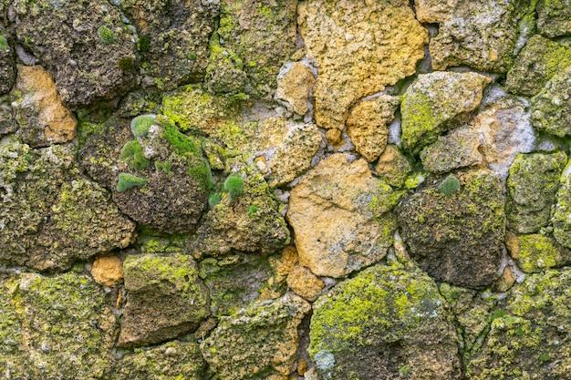 Muro de piedra con musgo de cerca