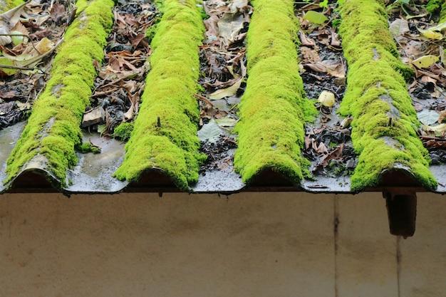 Musgo que crece en las tejas con hojas secas. concepto de fondo