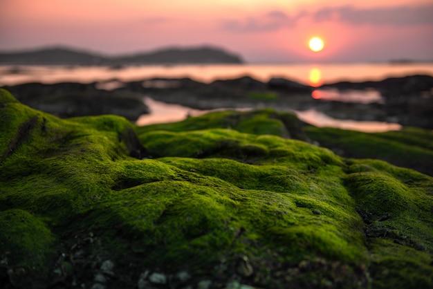 Musgo verde en el arrecife