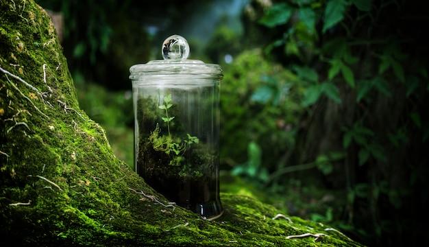 Musgo verde en el jardín de invernadero en la naturaleza fresca de la selva tropical con recolectar naturaleza en caja