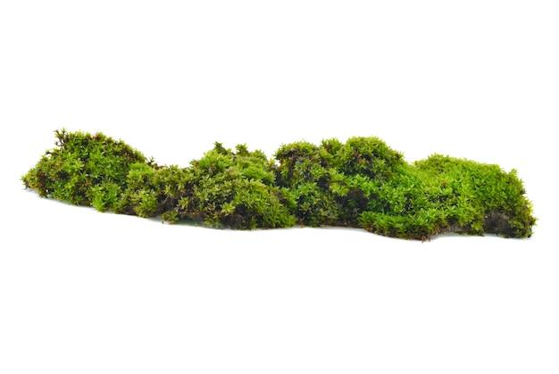 Musgo verde con pasto aislado sobre fondo blanco.