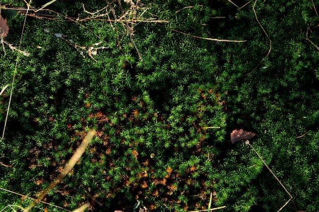 Musgo verde en el suelo, textura de la tierra cubierta de musgo.