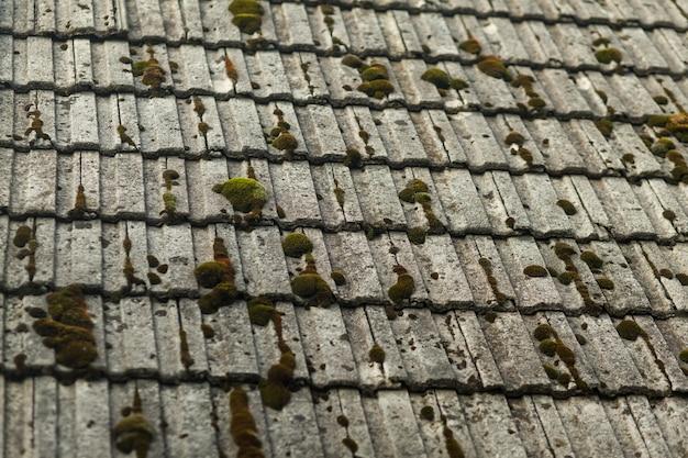 Musgo verde en un techo viejo