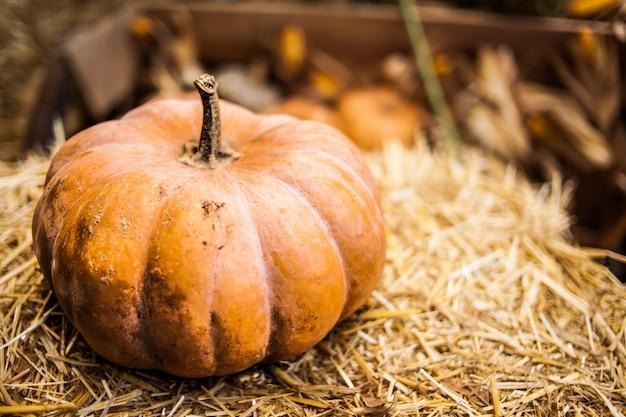 Naranja calabaza en el heno. otoño. cosecha.
