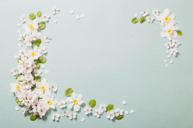 Narciso blanco y flores de cerezo sobre fondo de papel verde