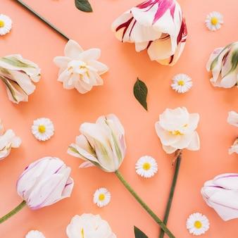 Narciso, tulipán, patrón de flores de margarita de manzanilla en la superficie del melocotón