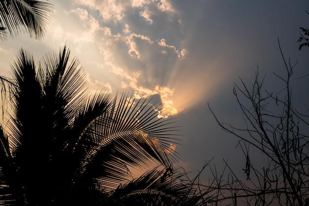 Natural de la salida del sol de la puesta del sol para el cielo dramático brillante de la nube con los árboles de coco.