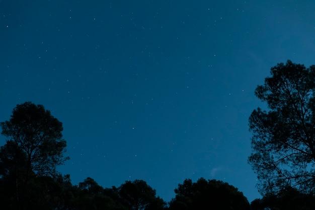 Naturaleza de ángulo bajo en la noche