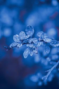 La naturaleza deja gotas de agua tono de color azul