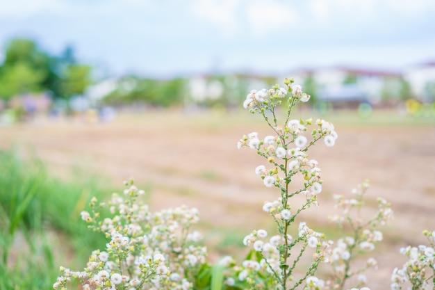 Naturaleza de la flor de la hierba de primavera con el fondo de la ciudad