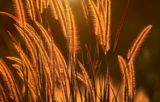 Naturaleza flores silvestres en la luz del sol en la puesta del sol