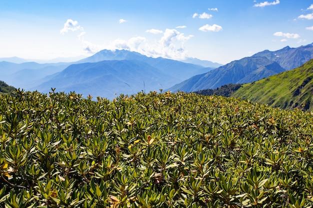 Naturaleza de fondo escénico de paisaje de montaña, verano en los alpes