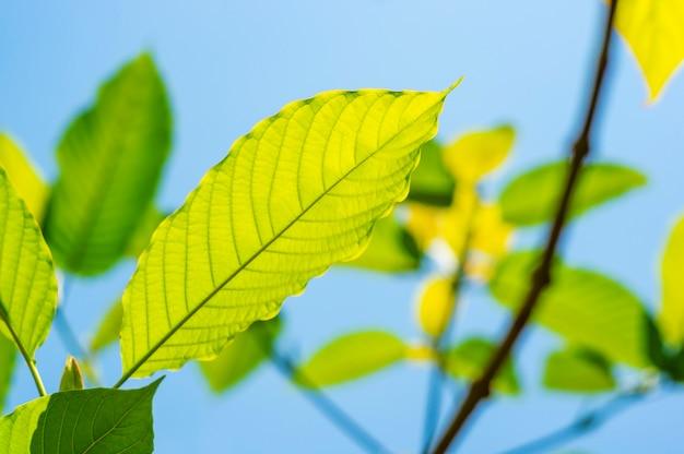 Naturaleza de hoja verde con rama en lblue cielo naturaleza