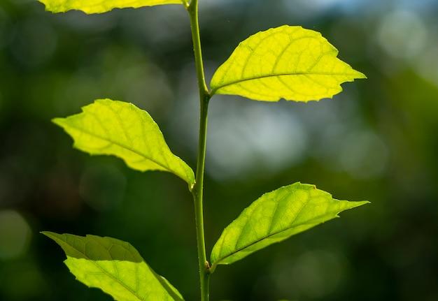 Naturaleza de hoja verde con rama en luz bokeh