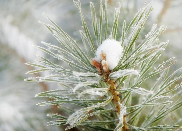 Naturaleza invernal flor congelada