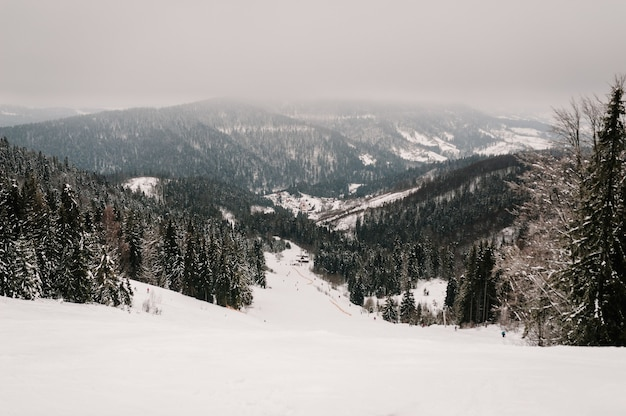 Naturaleza invernal. paisaje. personas en esquís y tablas de snowboard descienden de la montaña en pista de nieve en los cárpatos.