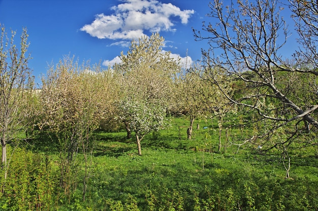 Naturaleza de las montañas del cáucaso en armenia