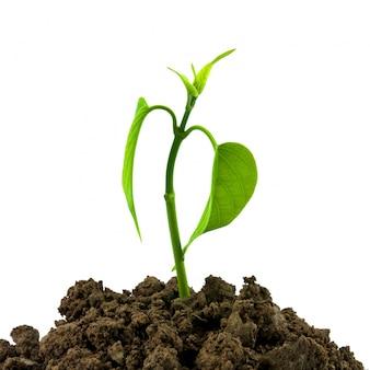 La naturaleza sana ecología cultivada