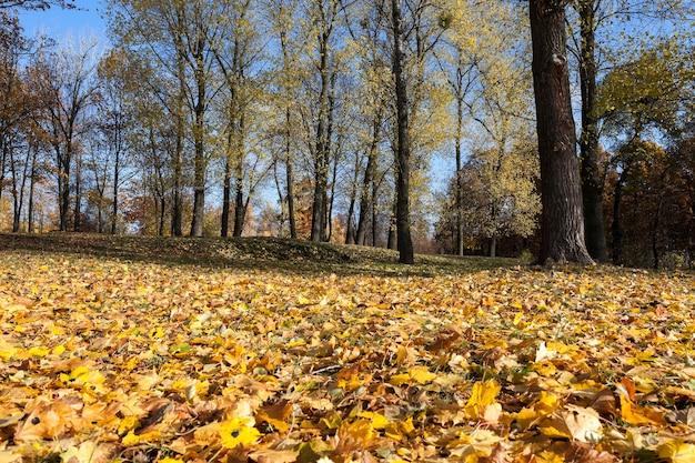 Naturaleza en la temporada de otoño: árboles fotografiados y naturaleza en el otoño del año, vegetación y árboles amarillentos