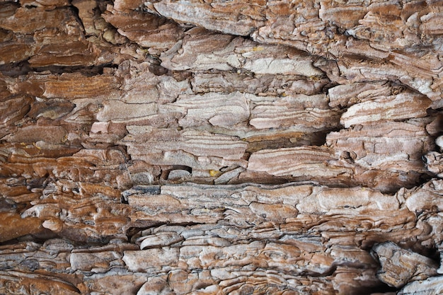 Naturaleza de la textura de la corteza de árbol de la naturaleza para el fondo