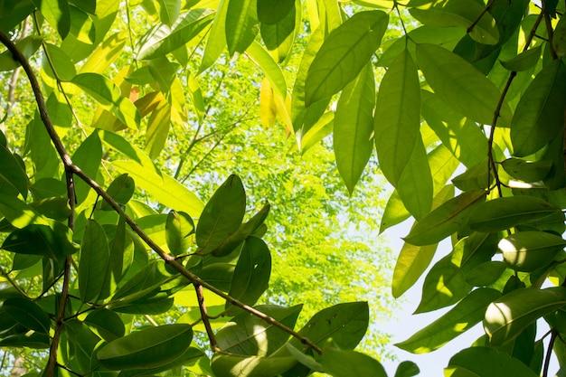 Naturaleza, verde, leanes, fondo