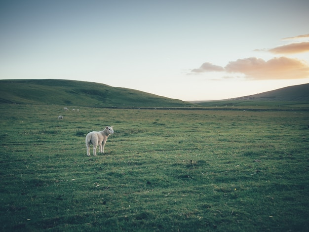 Nave única en un gran campo verde hermoso con colinas y hermoso cielo