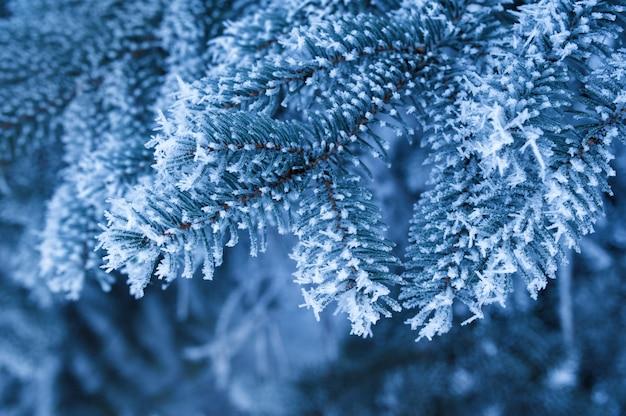 Navidad las hermosas ramas cubiertas de nieve de abetos en winter park