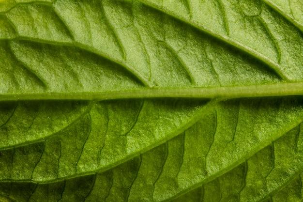 Nervios de la hoja verde de primer plano