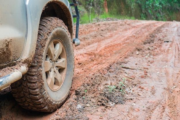 Neumático de coche en el camino de tierra con el tronco de un árbol caido en un bosque.