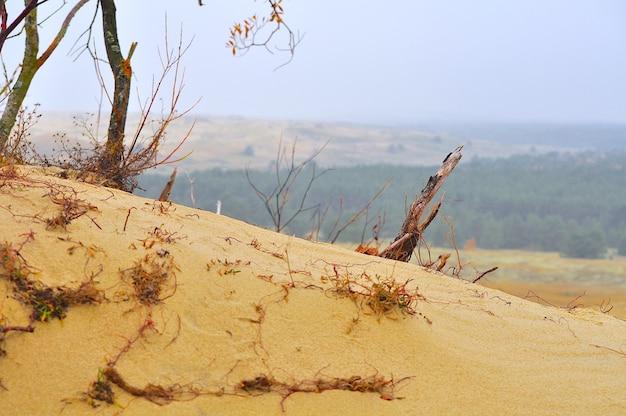 Nida, dunas de arena