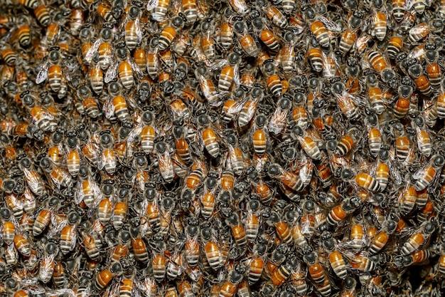 Nido de abejas en el jardín